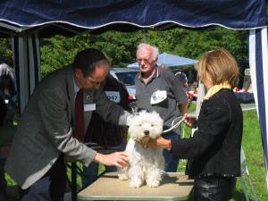7. Black and White Terrier Show